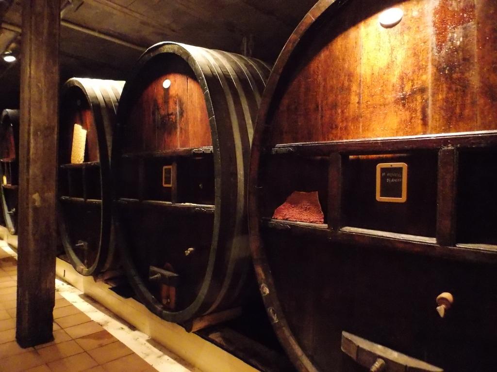Vingårdsbesök i vinkällaren hos Kuentz-Bas i Alsace med stora och gamla ekfat