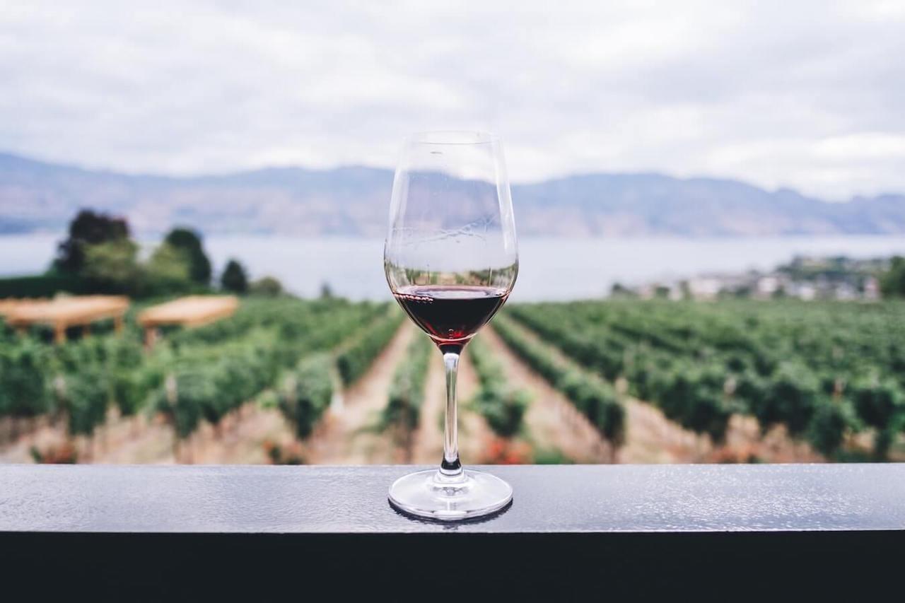Ett glas rött vin med utsikten över vingården