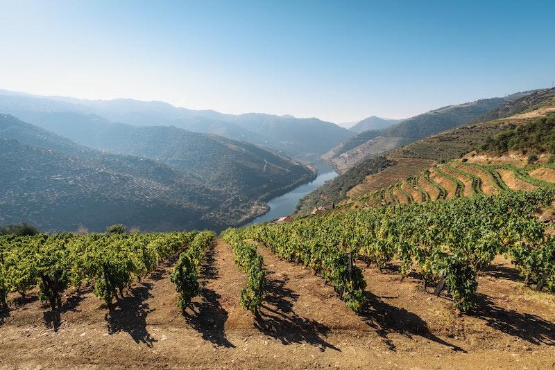En vacker vinodling i Duoro i Portugal