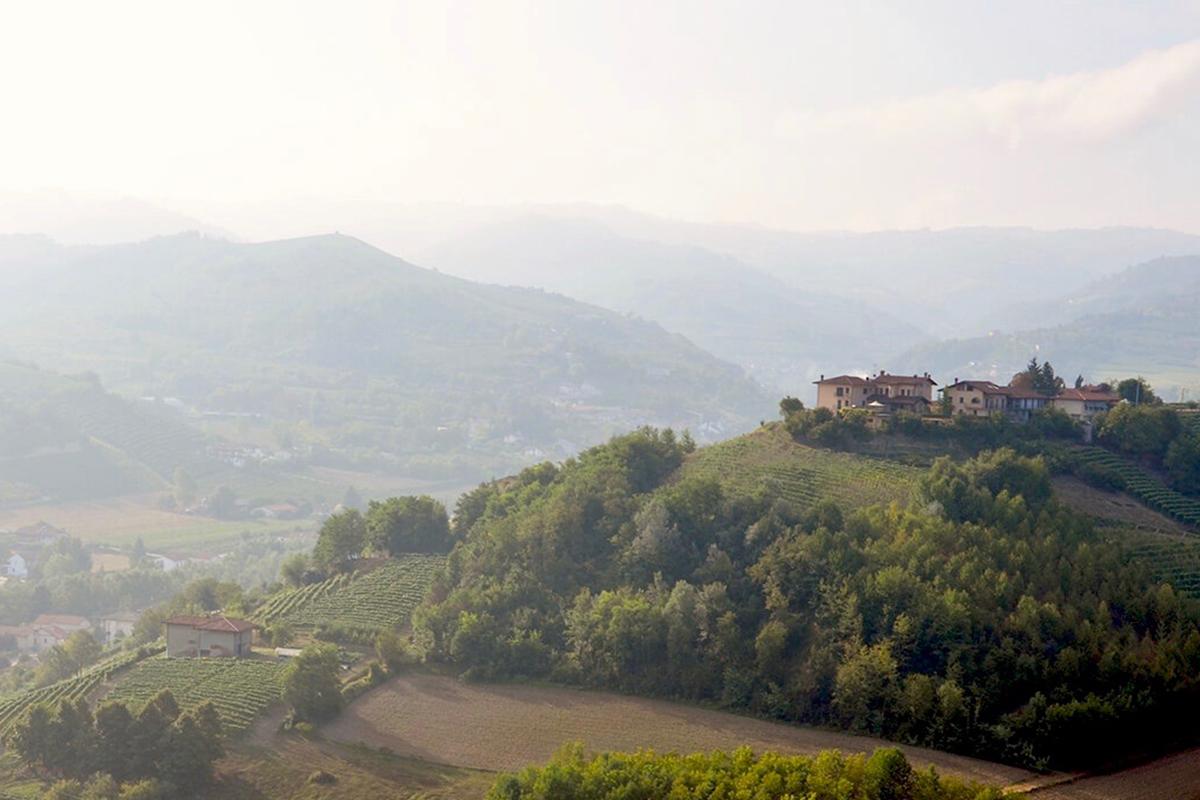 Utsikt över kullar med vingårdar i Barolo under tryffeljakt