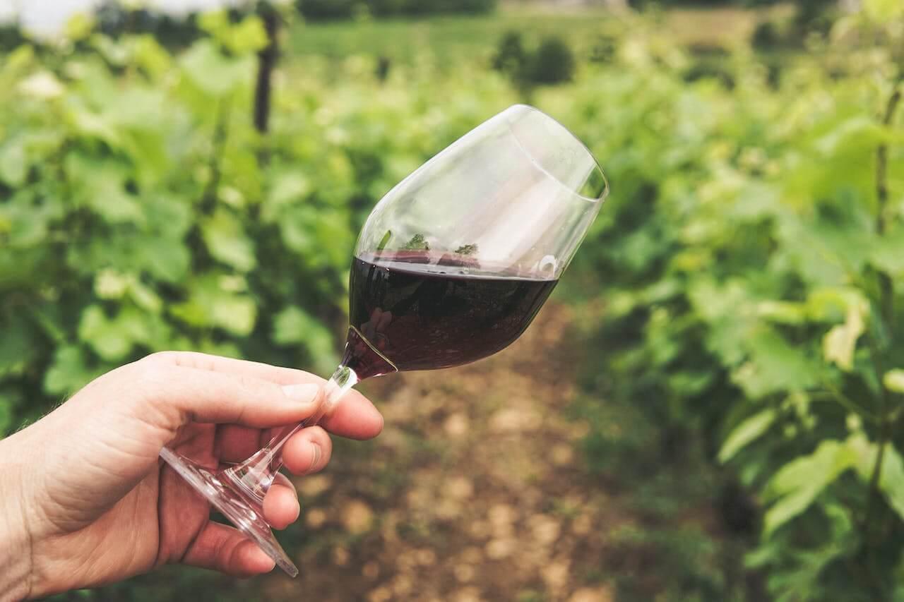 En person håller ett glas rött vin på en vingård