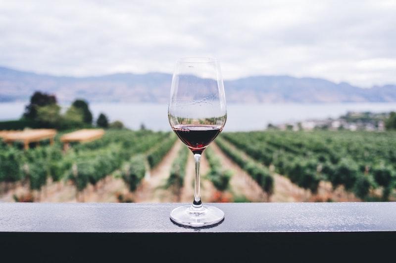 Ett glas rött vin med utsikt över en vingård med en sjö längst bort.
